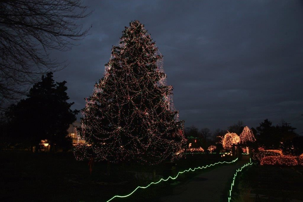 toledo zoo wins best zoo lights for the second year - Toledo Zoo Lights Before Christmas
